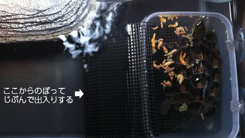 食堂タッパー