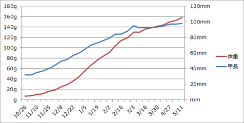 クサガメたわしの身体測定グラフ