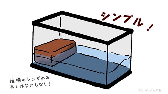 くさがめたわし シンプルな水槽