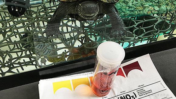 クサガメたわし 水換え後の水質検査結果